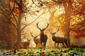 Appeltaartconcert in het bos